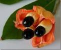Яичница с ветки или мало известные растения