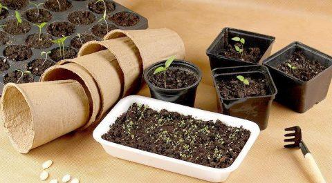Минус на термометре - плюс для урожая?